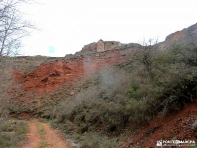 Cañón Caracena; Encina  Valderromán; cabrilla calatañazor galicia artabra castril